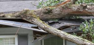 insurance-cover-fallen-trees